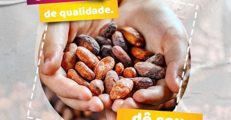 Plataforma digital Leilão Cacau amplia oportunidades de comercialização